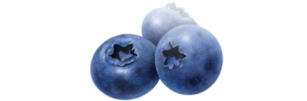 blueberries for lowering cholestrol