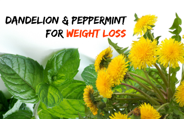 peppermint-and-dandelion for weight loss